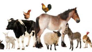 【加計学園問題】ウィキペディア「獣医学部」を読む