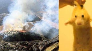 ネズミ一匹を殺すために山を焼く日本の新型コロナウイルス対策